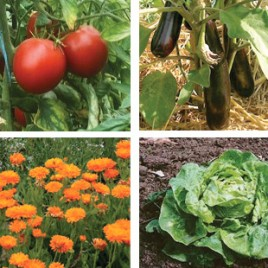 Plants légumes et fleurs