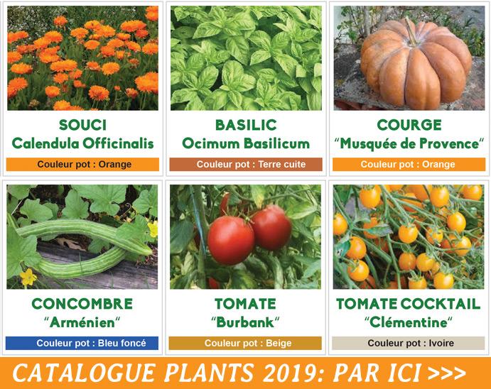 2019-cat-plants